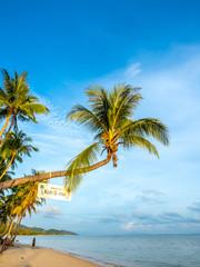 Coconut tree at sand beach at Samui island