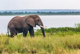 elephant on the Nile