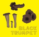 Mushroom Type Black Trumpet Vector Illustration - 235250120