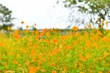 黄色い花畑 © Megmy