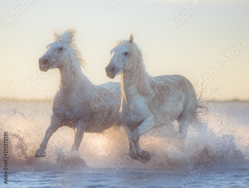 white horse in the water