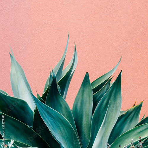 Plants on pink fashion concept. Green on pink wall background.  Minimal plant design - 235277971
