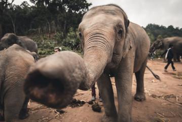 słonie © Witold