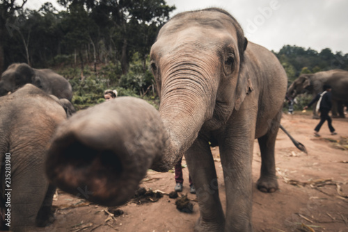 Plakat słonie