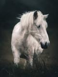 Koń © Witold