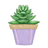 hand drawn illustration with lilac flowerpot and green succulent on a white background isolated. Drawing in style marker sketch - 235297308