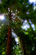 Tilt shift image of trees in the forest near Vancouver, British Columbia