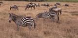 Amboseli National Park © Horace