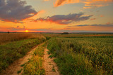 Beautiful summer sunset of rural landscape © kwasny221
