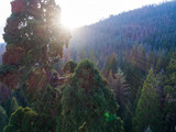 Sunset in Giant Sequoia Forest