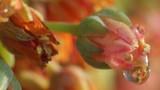Es la flor de la planta llamada Sedum morganianum o burrito de origen mexicano u hondureño
