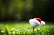 Leinwanddruck Bild - Festive-looking golf ball on tee with Santa Claus' hat on top for holiday season on golf course background