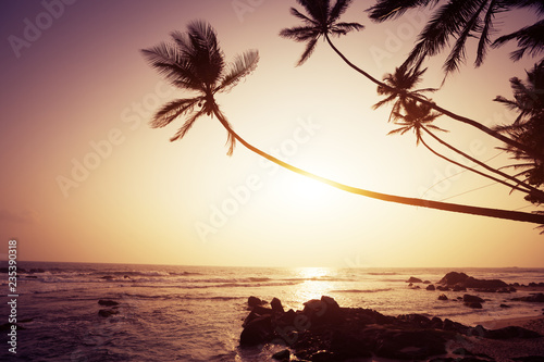 Tropical beach with coconut palm trees in the sunset