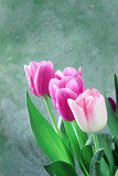 bouquet of tulips on green background © Andrii