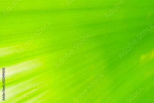 Close-up and long exposure effect of green fan palm leaf on blurred motion under sunlight in the morning, abstract of greenery nature background, for use wallpaper and backdrop on eco green concept. - 235494305