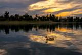 Sunset Duck © JHK FOTO AZ