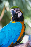 Portrait of Blue and Yellow Macaw