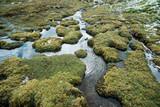 high altitude marsh - 235592315