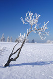 Winter landscape with small tree on the Feldberg in the Taunus, Germany. - 235633594