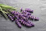 Bouquet of lavender  on a gray  background. © Profotokris
