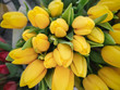 Flowers tulip, close-up.