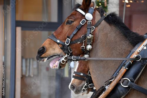 wagon horse on snow detail