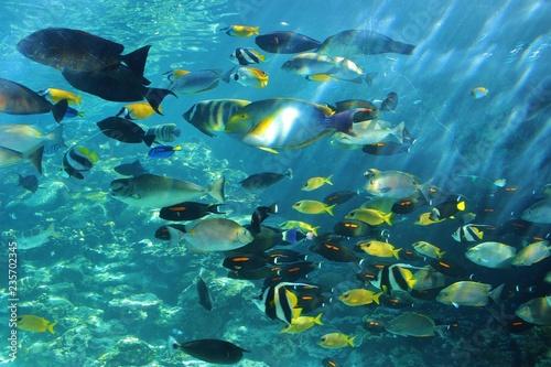fototapeta na ścianę faune aquatique australie