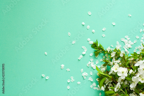 White cherry blossom twigs lying on mint paper background. Copy space.