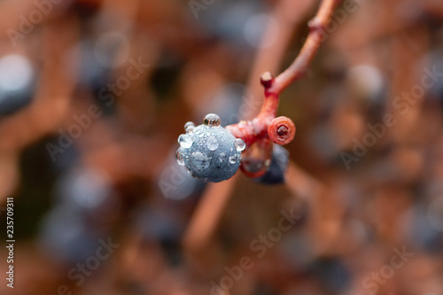 Grape With Waterdrops - 235709311