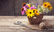 Leinwandbild Motiv Wild flowers and scissors on old grunge wooden background (chamomile lupine dandelions thyme mint bells rape)