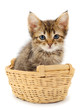 Kitty sitting in basket.