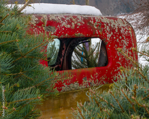 red rusty antique truck surrounded by christmas trees