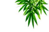 bamboo leaves isolated on white background © pernsanitfoto