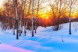 Red sunset in frozen winter forest - 235822503