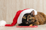 Playful cat in a Christmas hat looks up and lies near the candy