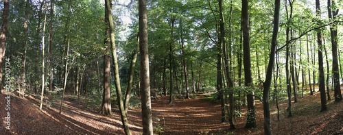 High resolution panorama of forest views - 235907124