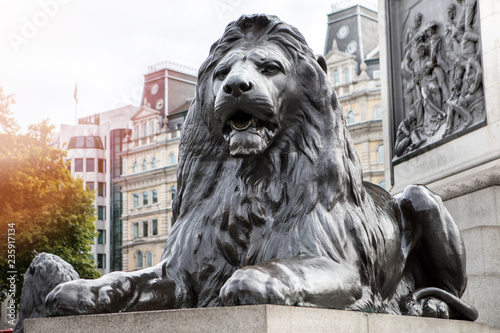 lion at trafalgar square london , united kingdom