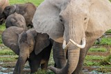Elefant mit Kalb im Amboseli Nationalpark