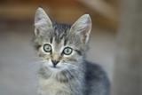 Portrait of a kitten - 235947995