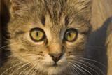 Portrait of a kitten - 235948189