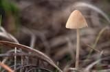 Pequeña seta en el bosque