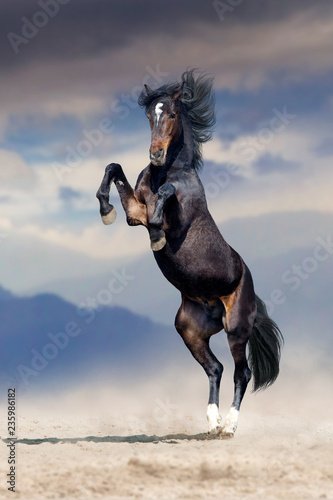 Bay stallion rearing up with mountain landscape behind
