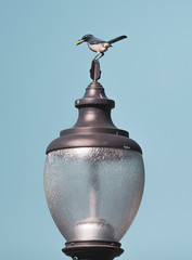 Birdy on Lamp