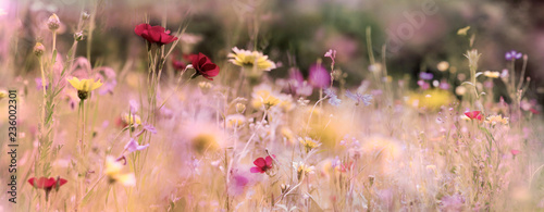 wildflower meadow nature banner pastel