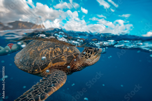 Closeup shot of a turtle underwater making air bubble, a girl swimming next to an animal