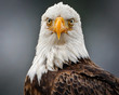 Eagle looking out you