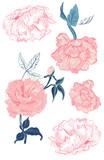 Peonies and vintage roses