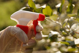 Spraying plants with plant protection products. Garden plant care. - 236063582