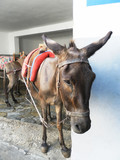 Donkey with a saddle is in Lindos. The Island Of Rhodes. Greece