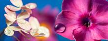 "Постер, картина, фотообои ""macro picture of pink flower with rain drop"""